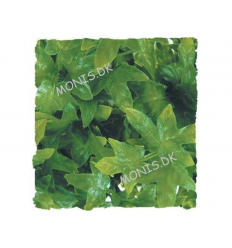 Zoo Med Natural Bush Congo Ivy