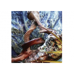 Dragon lina  2,5ø / 100cm