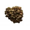 Pre Alpin Testudo Herbs 12,5 KG