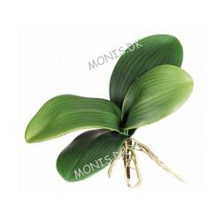 Dragon Orchideblade - Plastik Orkide Blade