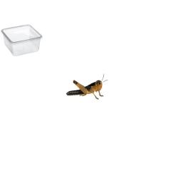 Græshoppe Small 15 Pr. æske - Europæisk
