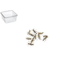Græshoppe Small 15 Pr. æske - ørken