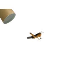 Græshoppe Small 100 Pr. Rør - Europæisk