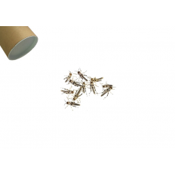 Græshoppe Small 100 Pr. Rør - Ørken