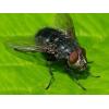 Spyfluer maddiker 50ml