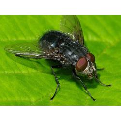 Spyfluer maddiker 500ml