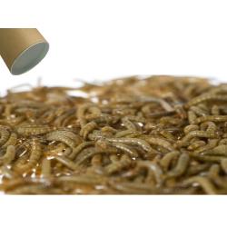 500g Small melorme - et overset foderemne der holder længere end almindelige melorm, perfekt til dig der vil starte selv!