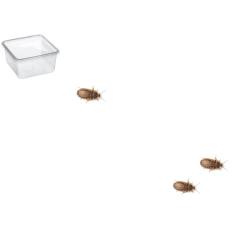Dubia kakerlakker Small 20 stk.