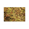 Komodo Habitat Moss kompakt