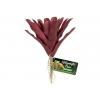 Zoo Med Naturalistic Flora – Fireball Bromeliad