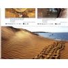 Terralog Vol 5 - Turtles of the world australia and ocean, Billeder fra bogens indre af havskildpadder der lægger æg, køb her!