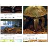 Billeder af slangehals skildpadder fra australien i bogen Terralog Vol. 5 Turtles Of The World Australia og Ocean.