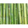 Grøn Bambus Ø25-40 mm - 100cm
