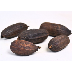 Kakao nødeskal tørret til dekoration i amazonas terrariet. En naturlig og flot dekorationsgenstand som kan købes på Monis.dk.