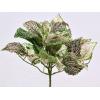 Plastik Fittonia Nerve plante 25cm - En super flot dekoration både til hjemmet og til terrariet. Køb online på Monis.dk.