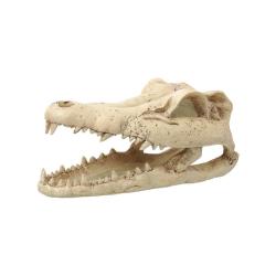 Repti Planet Krokodille Kranie