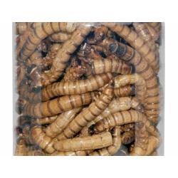 Dragon - Crispy Food - Tørret Zophobas larver