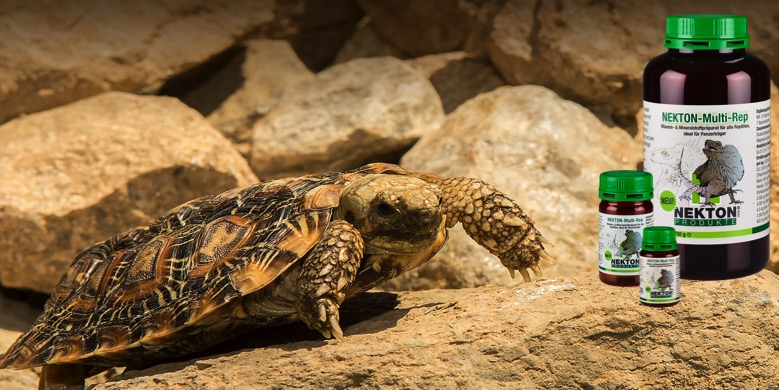sprøjte skildpadde